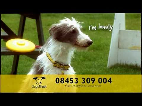 Dogs Trust Home