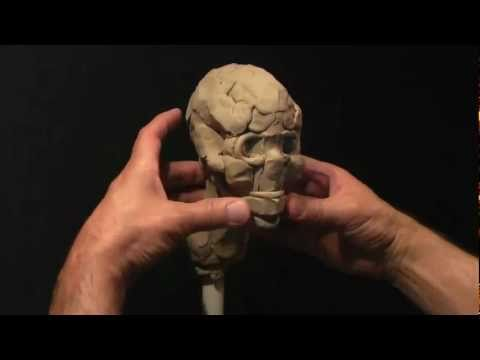 Sculpting a Human Skull in Clay_part-1