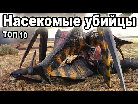 Топ 10 самые опасные насекомые в мире.  Укусы насекомых