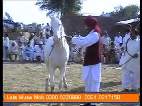 pakistani horse dancing (gora dance) part2