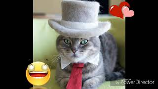 Cats dressed in funny costumes | Very funny