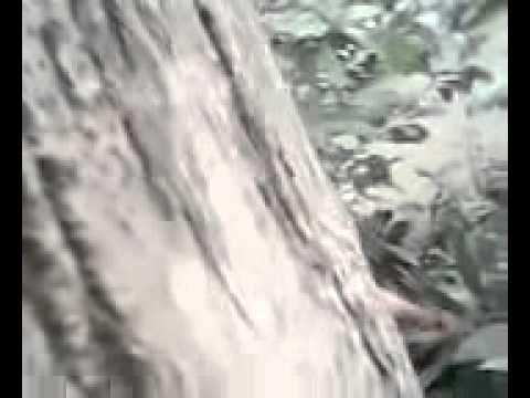 Ngintip Cewek Mandi video