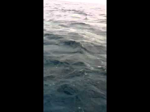 Shark fishing, Free port bahamas