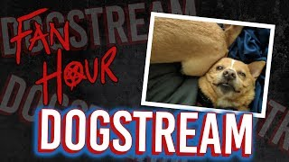 DOGSTREAM!!!!!! (+ Announcements + Story Time) // Snarled Live | Snarled