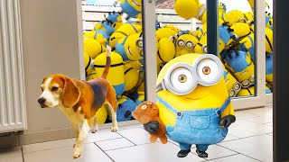 """Funny Dog Vs """"Turbo Dave"""" The Minion Robot! + FREE Turbo Dave GIVEAWAY!!"""