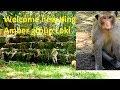 Surprise Poor Lori King Invader Fighting King Kong King Kong Donkey Get New King Amber Group mp3