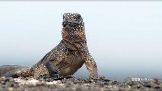 NEW PREMIERE DATE: Feb. 18th   Iguana vs Snake - Planet Earth II on BBC America