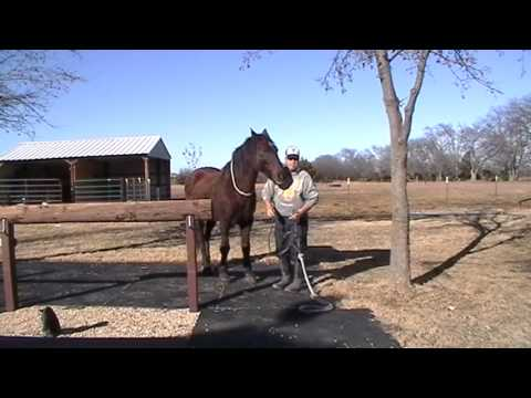 Double Diamond Rope Halter Review - Importance of Winter Grooming- Loop One Rein Riding