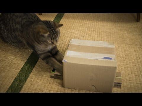 猫がパンチした数をカウントするシステムの試作
