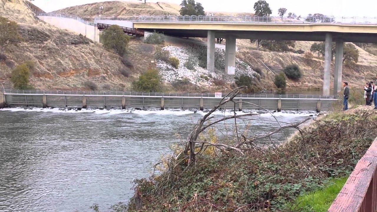 American river at nimbus dam youtube for Nimbus dam fishing
