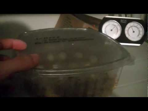 DIY: Reptile Incubator. Easy Homemade Do It Your Self Incubation! (HD 720p)