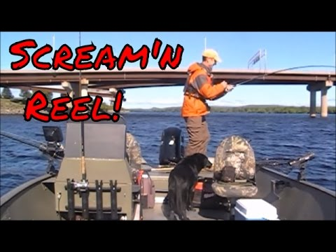 Trolling for Striped Bass on the Saint John River, New Brunswick