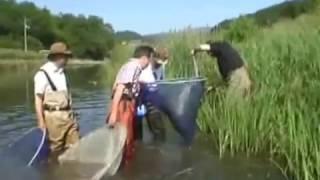 野生の伊達 広瀬川水生生物研究会 ガサガサ隊