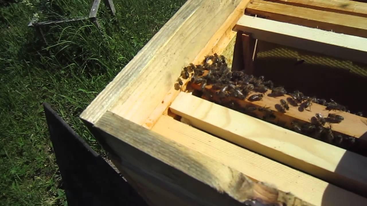 Как сажать пчел в новый улей 42