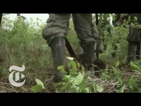 World News: Peru's Coca Conflict | The New York Times