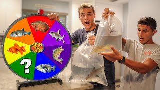 Spin the Wheel & BUY what FISH it Lands on - Challenge