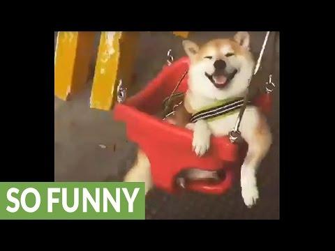 にっこり笑顔でゆらゆら揺れるブランコを楽しむ犬