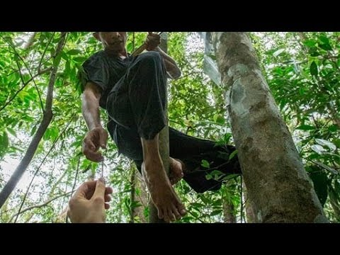 Rainforest Connection (RFCx): Old smartphones to catch illegal logging