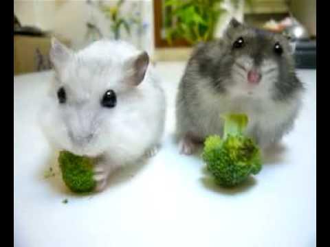 並んでブロッコリーを食べ...