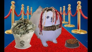Gucci Dog