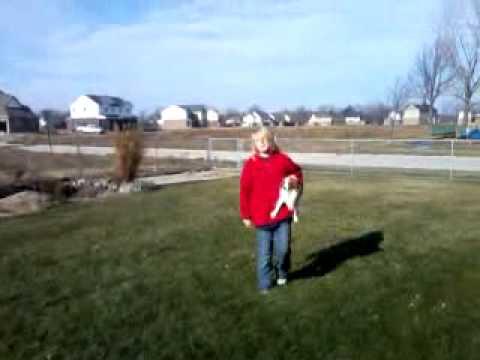 Dog Vs. Women video