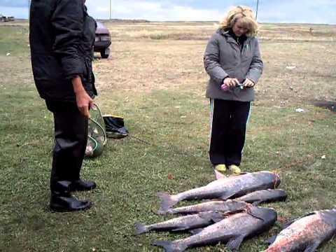 рыболовы стаханова