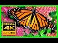 The Best Relaxing Garden in 4K - Butterflies, Birds and Flowers🌻🐦 2 hours - 4K UHD Screensaver MP3