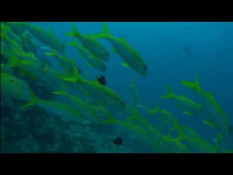 Papa vs Pretty - To Do - Great Barrier Reef