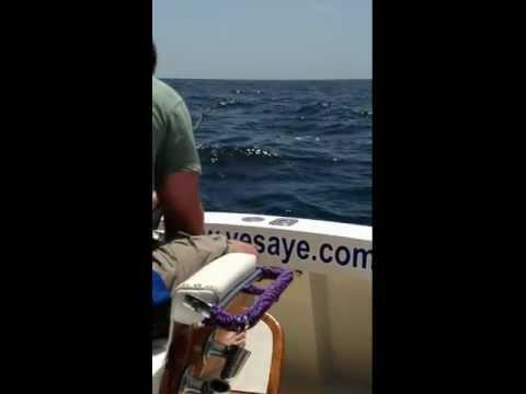 Reeling in the blue marlin