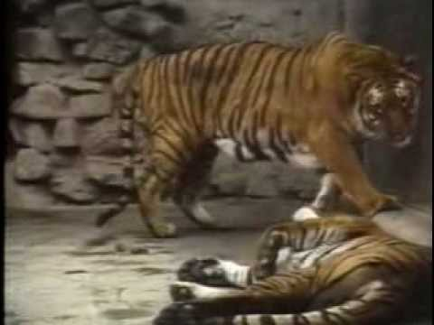 Call Of The Wild - Sex In The Zoo video