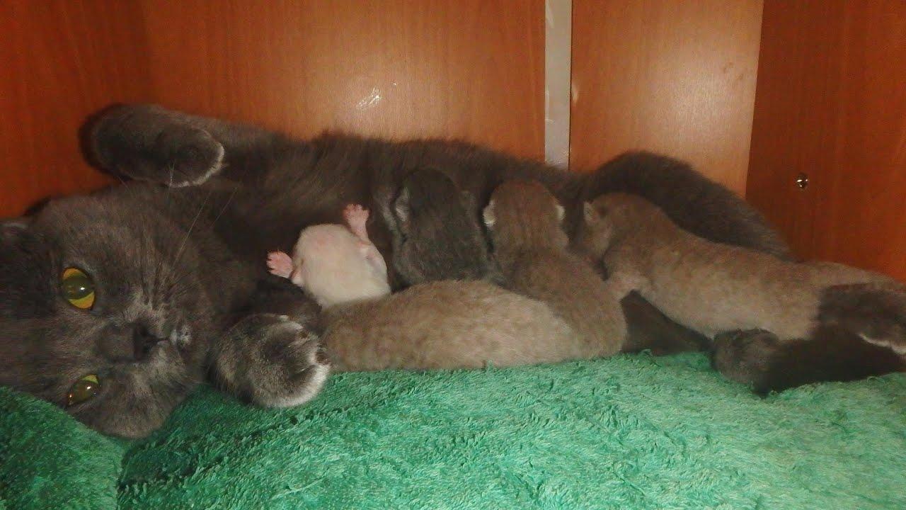 Вызвать в домашних условиях роды у кошки можно при помощи некоторых 38
