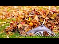 Effective Leaf Removal Services Omaha Lincoln NE Council Bluffs IA| Eppley Handyman Services