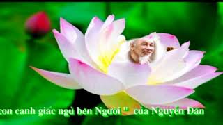 Chung con canh giac ngu ben Nguoi   May  nguyenthe6