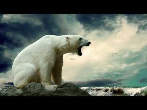 Антарктида самый загадочный и таинственный континент на Земле!