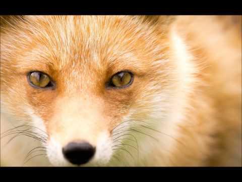 Xtc - Find The Fox