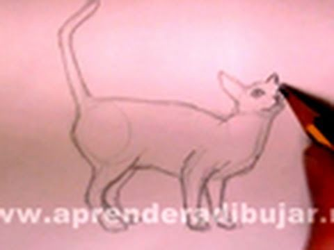 Cómo dibujar un gato a lápiz. - Dibujos de animales