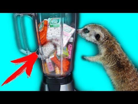 Что Если Смешать ВСЕ Вкусы Tic-Tac в Блендере ?! Сурикат пробует новое Смузи !!!
