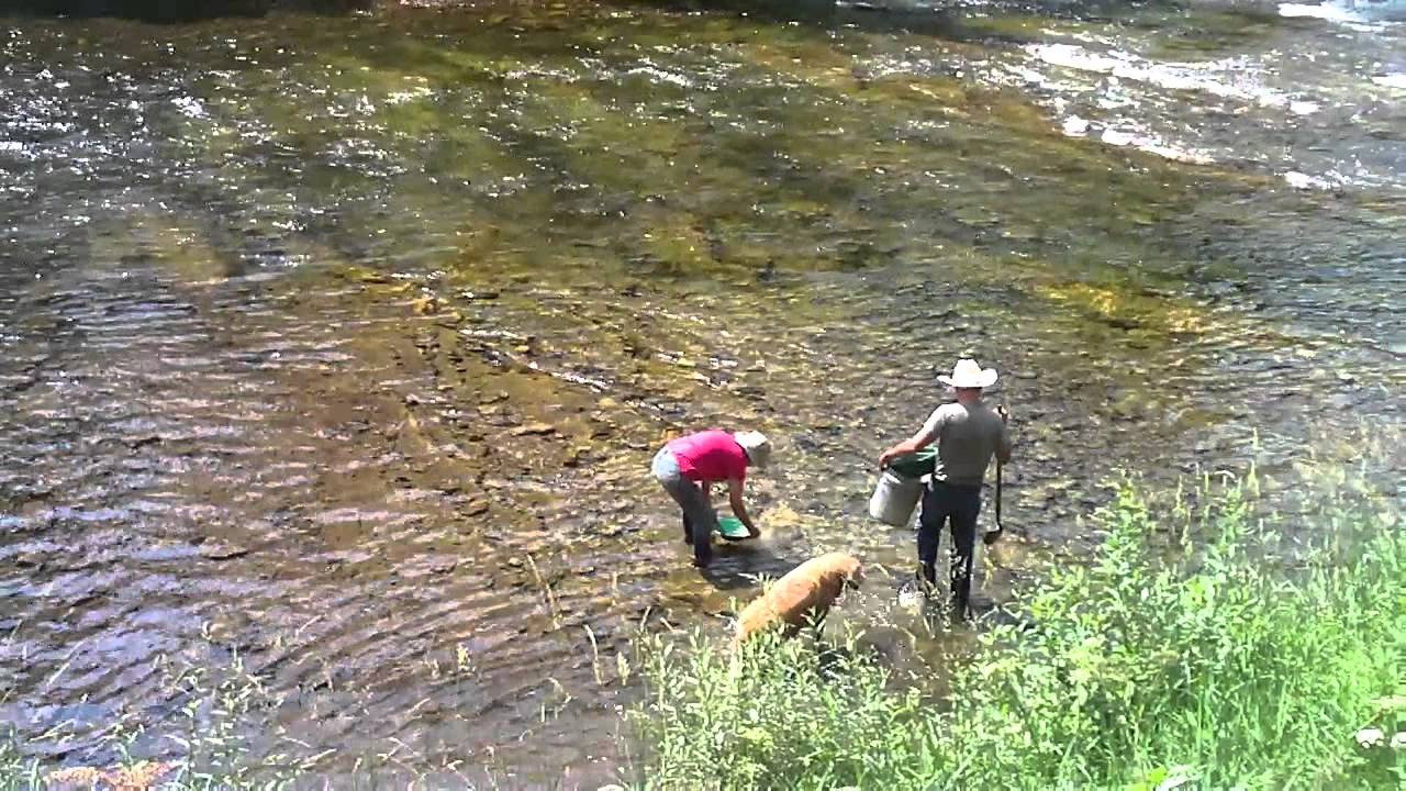 Panning Gold in Rivers Panning For Gold Salmon River