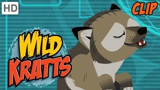 Wild Kratts - Howling Wolves