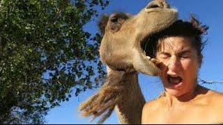 very very dangerous camel qurbani eid ul azha 2016