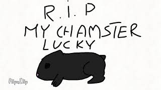 My chamster Lucky  died 😥😥😥 [*]
