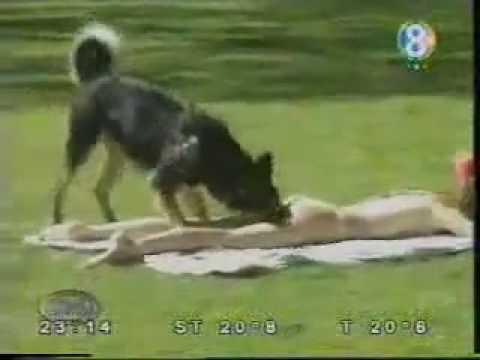 ცელქი ძაღლი/Cheerful dog