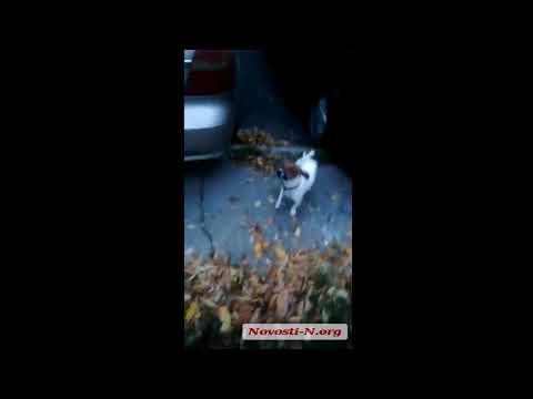 """Видео """"Новости-N"""": В Николаеве спасатели снимали с дерева кота, просидевшего там десять дней"""