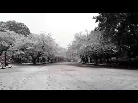 Tokyo snow ueno park