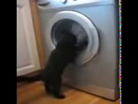 Cat vs Washing Machine ( Funny Video 2013 )