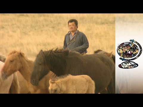 Mongolia's Nomads Are Making Money Again