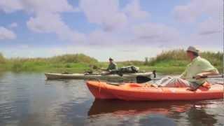 Florida Wildlife Corridor  Music - Into the Wind