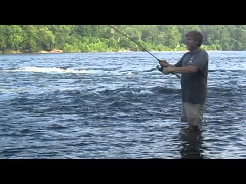Fishing report - NJ Fishing | Striper Fishing NJ | Delaware River | Curt Ryder Striper Fishing NJ Video