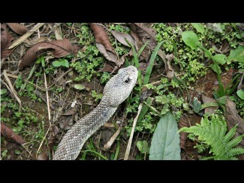 Clique e veja o vídeo Criação de Serpentes - Legislação