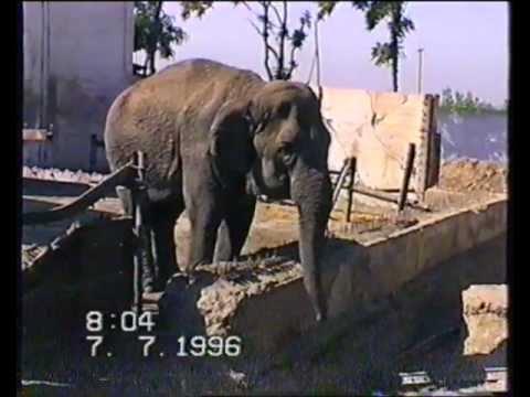 Зоопарк Термеза 90-х годов.Экстрим-как в Африке!!.wmv